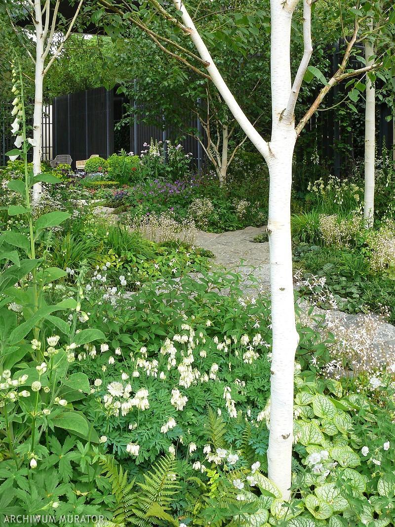 Miejsca pod drzewami w ogrodzie