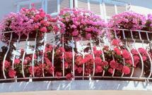 Kwiaty balkonowe to ozdoba balkonu. Stwórz kwiecisty balkon!