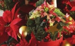 Boże Narodzenie: kwiaty, które wprowadzą do wnętrza świąteczny nastrój