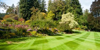 Zakładanie trawnika krok po kroku