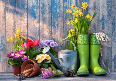 Piękne ogrody wymagają kompleksowej pielęgnacji. Poznaj 3 najważniejsze etapy