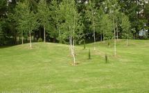 11 najczęstszych problemów z trawnikiem. Jakie są ich przyczyny?